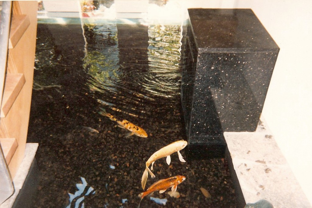 Custom indoor under stair koi pond for Indoor koi fish pond
